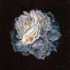 https://sites.google.com/site/reginapastels/gallery/flowers/peony-in-blue